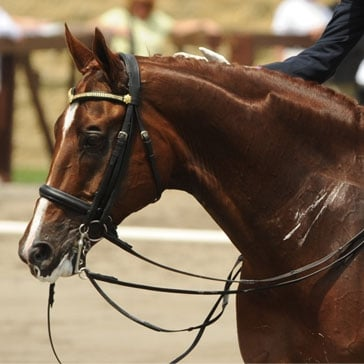 Dressage New South Wales